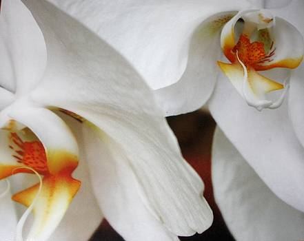 Orchid Beauty by LC  Linda Scott