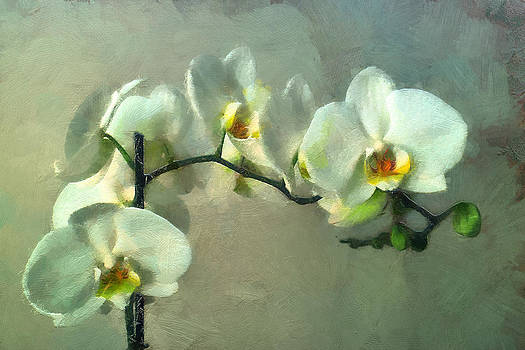Orchid by Boguslaw Florjan