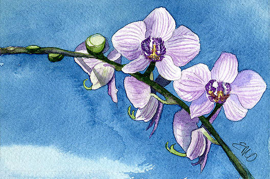Orchid by Eunice Olson