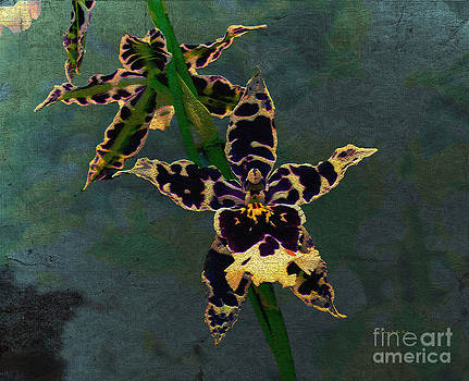 Orchid Study II by Patricia Griffin Brett