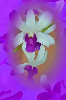Orchid Vignette by Beverly Hanson