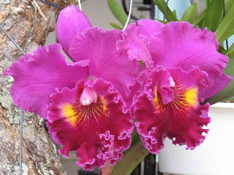Orchids 1 by Gloriana Hernandez