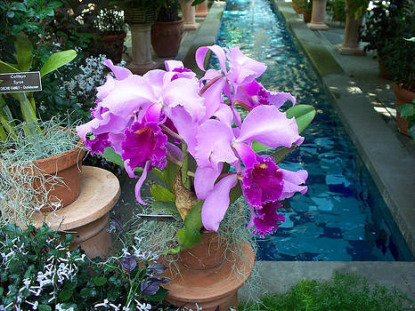 Orchids By The Poolside by Valerie Longo