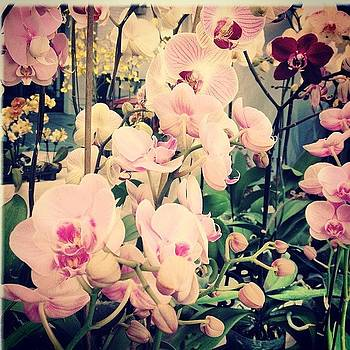 #orchids #farmersmarket by Denise Taylor