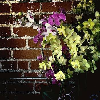 #orchids #flowers by Denise Taylor