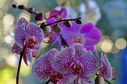 Orchids in Fall Light by Peter  McIntosh