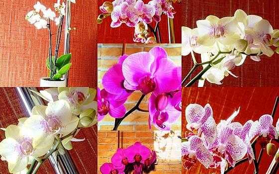 Orchids by Kovats Daniela