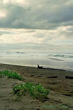 Deahn      Benware - Oregon Coast 17