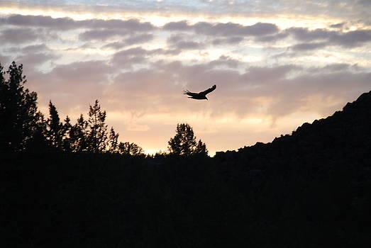 Oregon Desert Sunset by Michael Merry