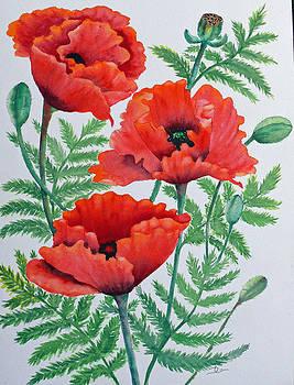 Dee Carpenter - Oriental Poppies