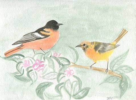 Oriole couple by Wenfei Tong