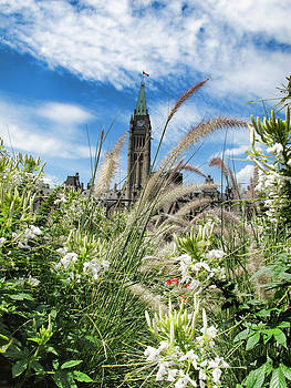Chantal PhotoPix - Ornamental Grasses and White Flowers under Clouds and Blue Sky - Parliament Hill - Canada