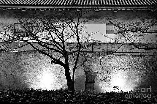 Dean Harte - Osaka Castle Wall