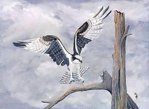 Osprey by Marsha Friedman