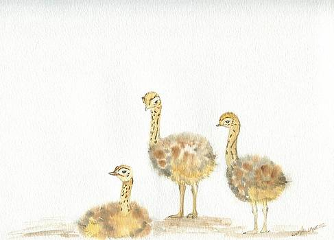 Ostrich chicks by Wenfei Tong