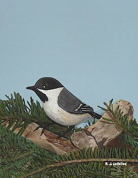 Our chickadee by Roland LaVallee