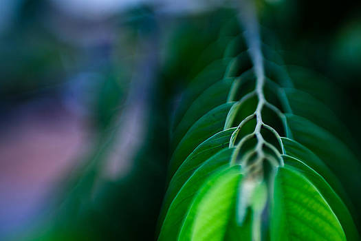 Out of Blur leaves by Victor Bezrukov