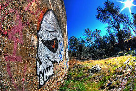 Outdoor Skull by Tom Melo