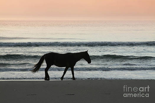 Outer Banks Mustang by Lori Bristow