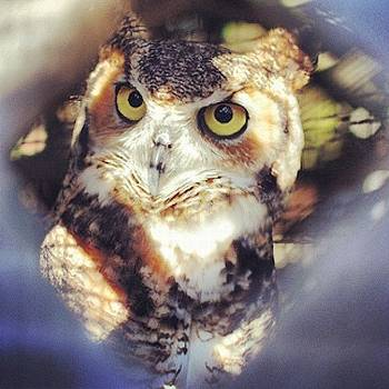 #owl #captive #captivated by Victoria Haas