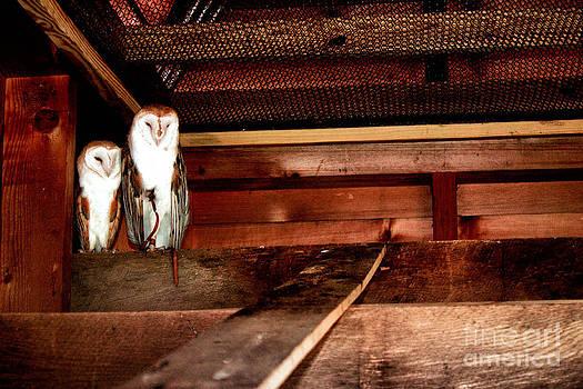 Owl by Carisma McVicker