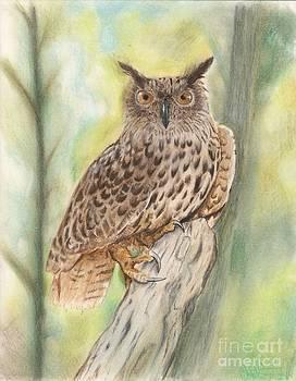 Christian Conner - Owl