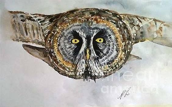 Owl I. by Paula Steffensen