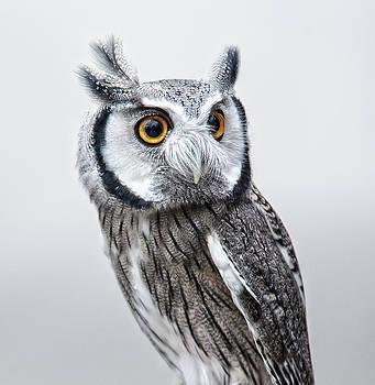 Owl by Jen Morrison