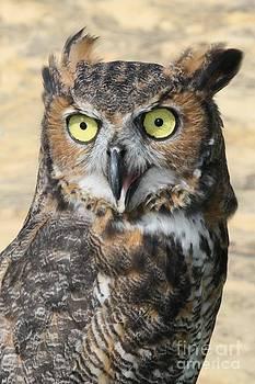 Owl by Lori Bristow
