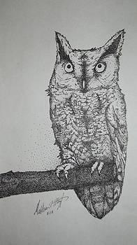Owl by Matthew Wright