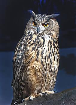 Owl Perch by Jen Morrison