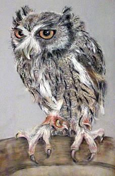 Owl by Tanya Patey