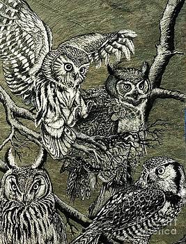 Owls by James Oliver