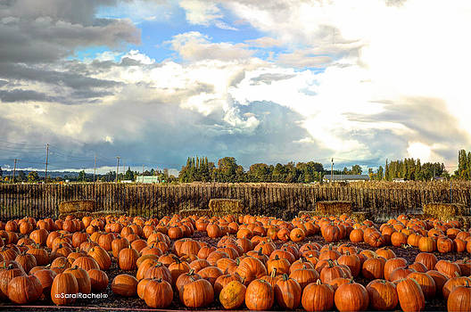 P is for Pumpkin Patches by Sarai Rachel