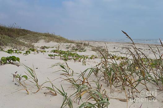 Padre Island dunes by Carol Wood