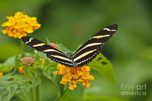 Christine Kapler - Painted Dance of Life - a butterfly