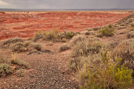 Painted Desert 3 by Susan OBrien