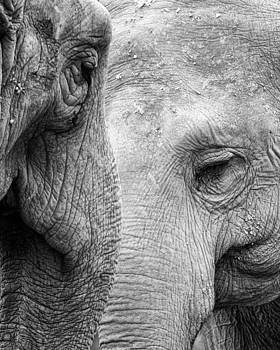 Pair of Pachyderms by Dick Wood