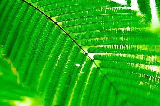 Palm Leaf by Andres LaBrada