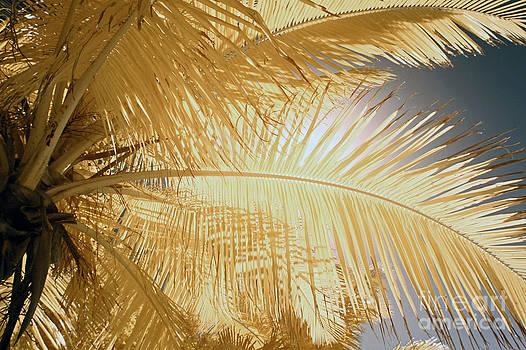 Keith Kapple - Palm Leaf