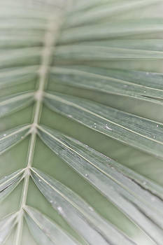 Palm leaf by Lannie Boesiger