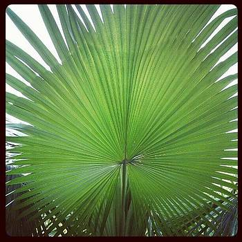 Palm by Nawarat Namphon