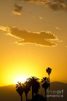 Palm Sunset by David Ricketts