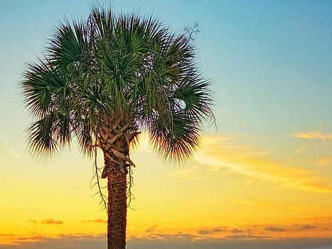 Palm Sunset  by Jenny Ellen Photography