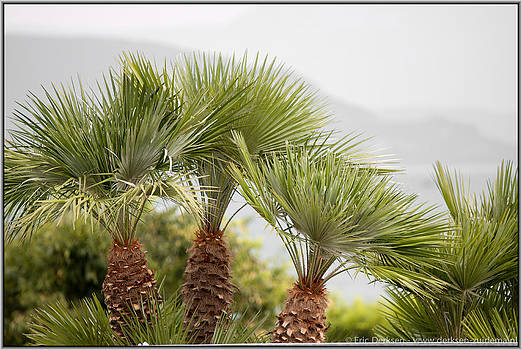Palm Tree over Garda by Eric D