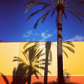 Palm Tree Shadows by Ann Marie Donahue
