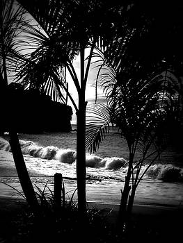 Kimberly Perry - Palm Tree Silouette
