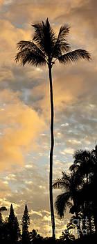 Palm Tree Sunset Hana Hawaii by Dustin K Ryan