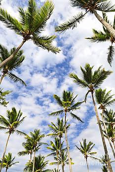 Elena Elisseeva - Palm trees