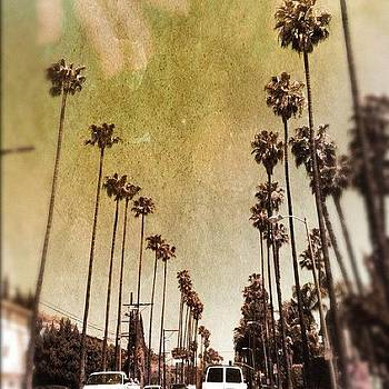 Palm Trees In Ca by Lia Kent